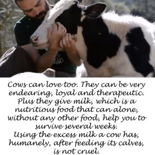 Cows can love too